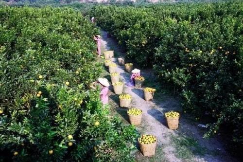 重磅!广东出台21条政策措施支持省级现代农业产业园建设