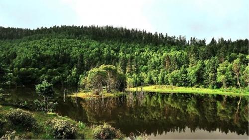 森林康养:被遗忘的金矿