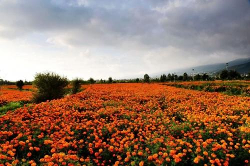 花海、花田、花林、花带、花镜、花架的区别