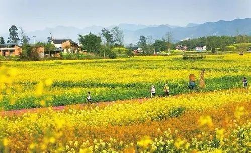 盈利才是关键! 如何把休闲农业打造成农民致富的大产业?