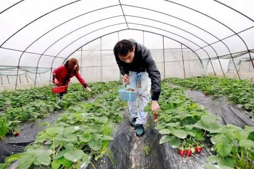 中国乡村振兴将迎来重大机遇,未来农村要做的四件大事!