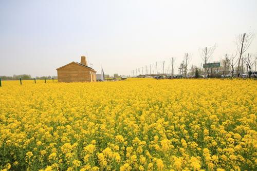 关于现代农业发展建议